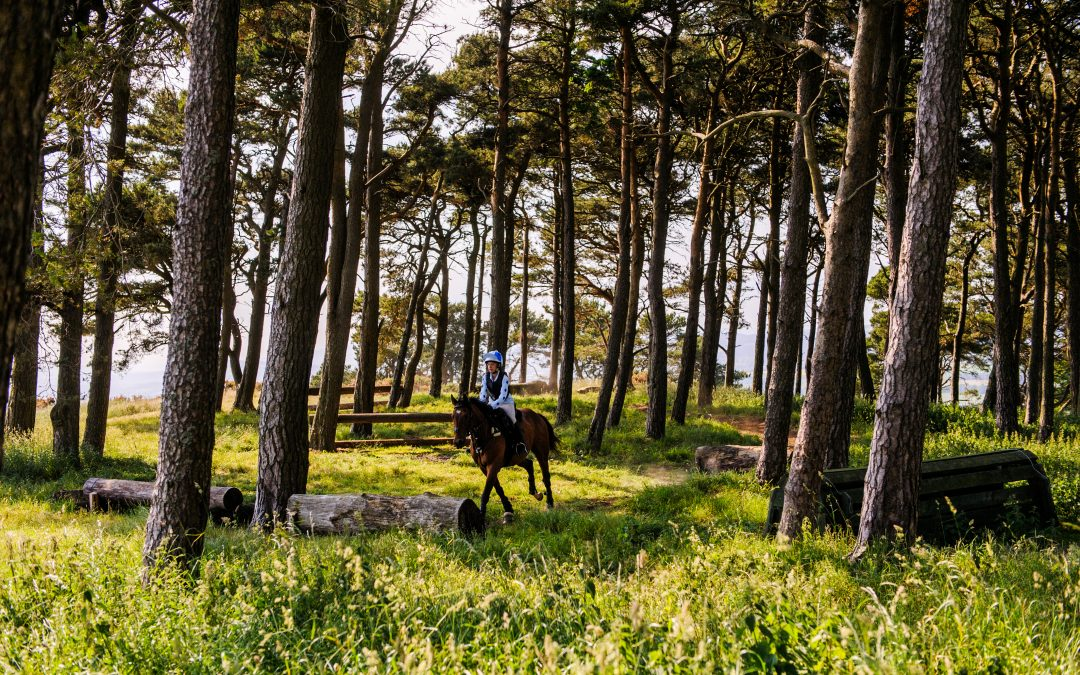 Article about Lindores: Horse Holidays, Awards and Growth